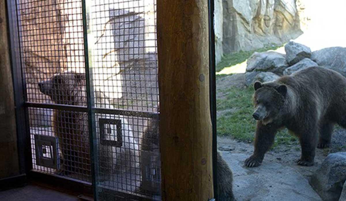 Scott Build Commercial Minnesota Zoo Bear Exhibit 1