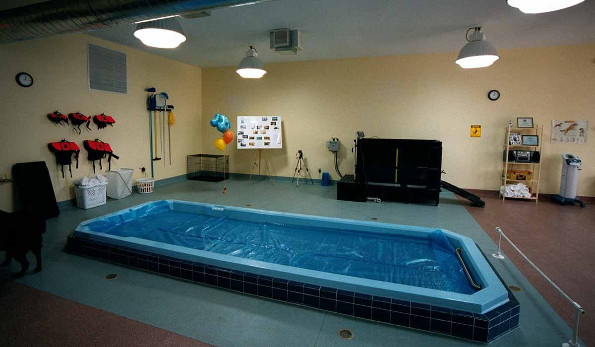 Scott Build Veterinary Gallery K9 Hydrotherapy St Louis Park Mn 3