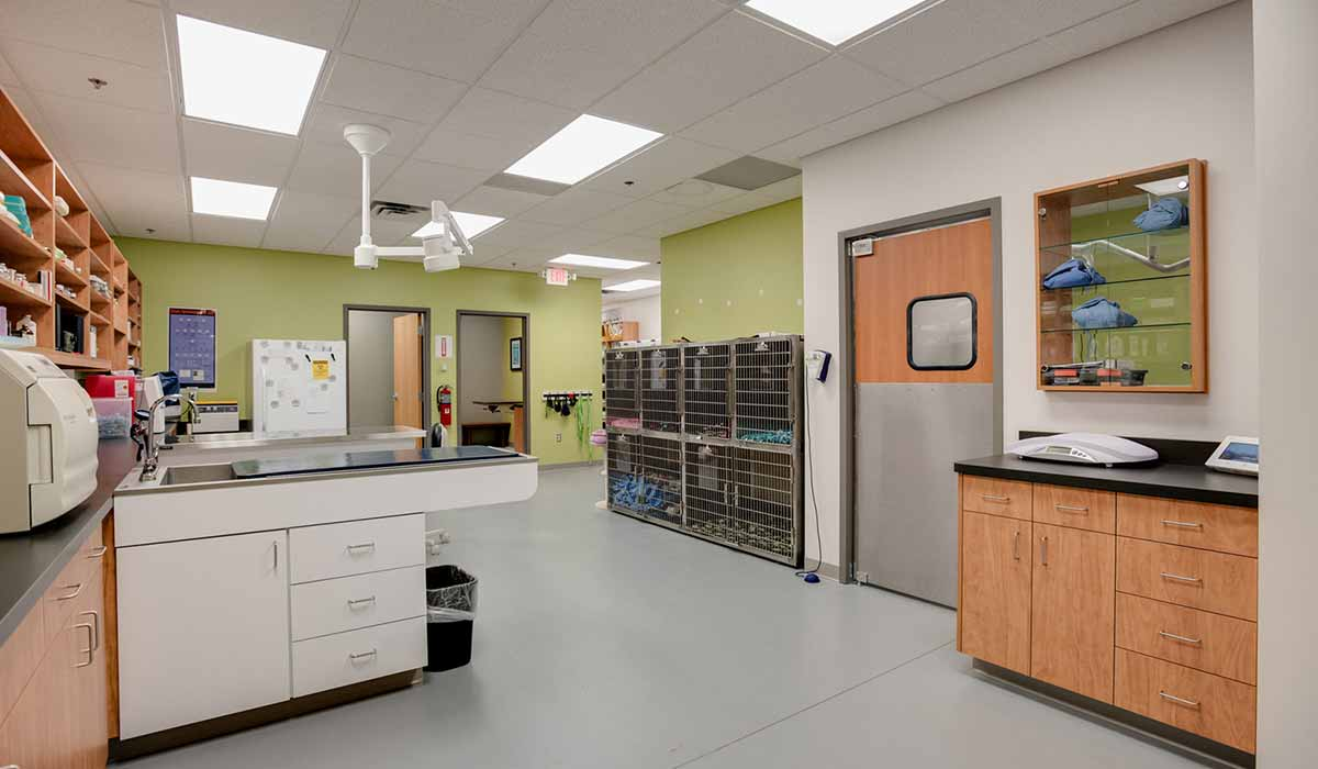 Scott Build Veterinary Gallery Vet Partners Plymouth Mn 4